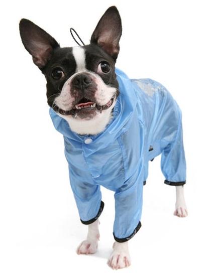 Одежда собаки авито москва